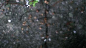 http://www.asadesouzajones.co.uk/files/gimgs/th-1_Untitled-53_v2.jpg