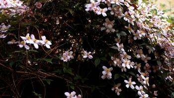 http://www.asadesouzajones.co.uk/files/gimgs/th-1_Untitled-7_v4.jpg