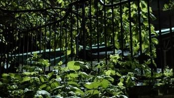 http://www.asadesouzajones.co.uk/files/gimgs/th-1_Untitled-8_v4.jpg