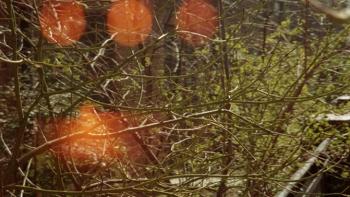 http://www.asadesouzajones.co.uk/files/gimgs/th-1_Untitled-98_v3.jpg